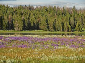flores-yellowstone